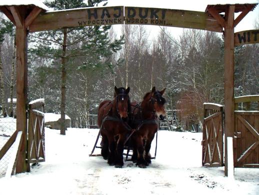 DSC00837a 640x480 Ośrodek agroturystyczny Hajduki – galeria zdjęć: obóz zimowy 2011