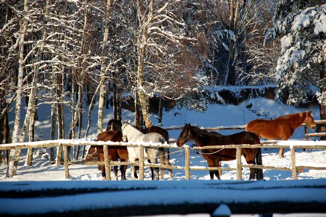 DSC 0638 Ośrodek agroturystyczny Hajduki – galeria zdjęć: zima w hajdukach