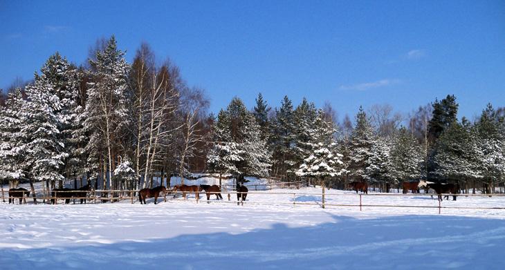 Zima w HAJDUKACH Chynowie 2 Ośrodek agroturystyczny Hajduki – galeria zdjęć: zima w hajdukach